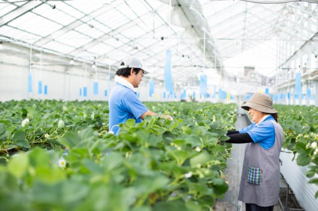 農作物のハウス栽培