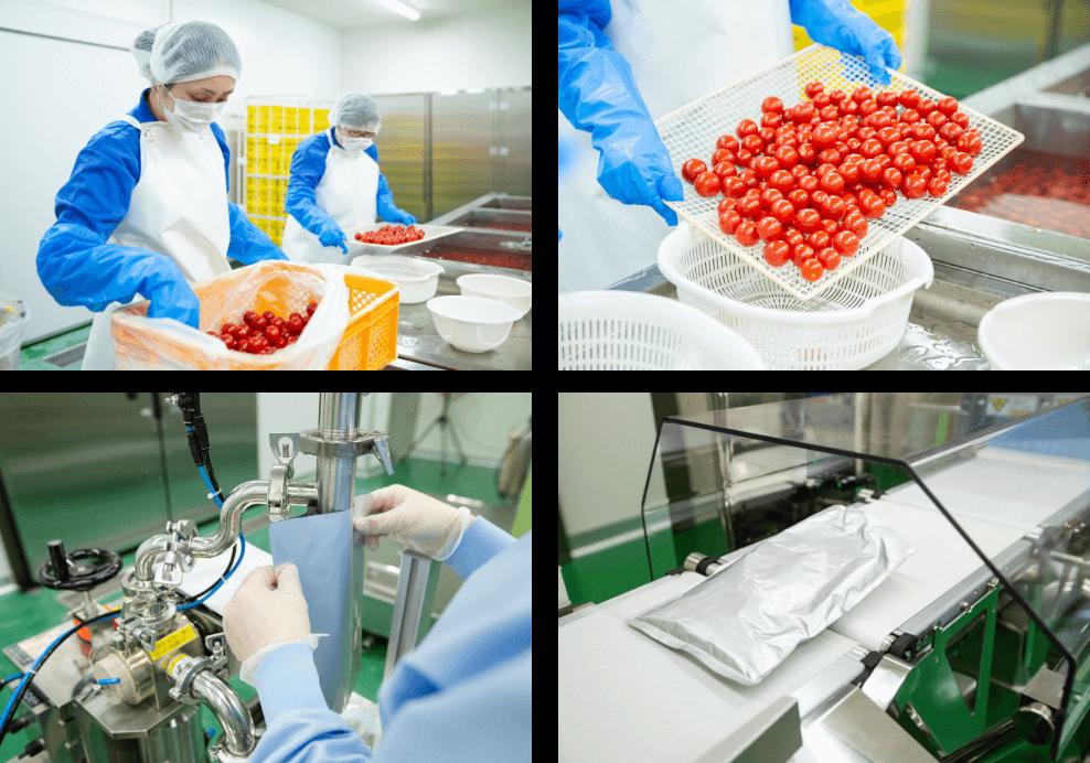 トマトの加工中の写真
