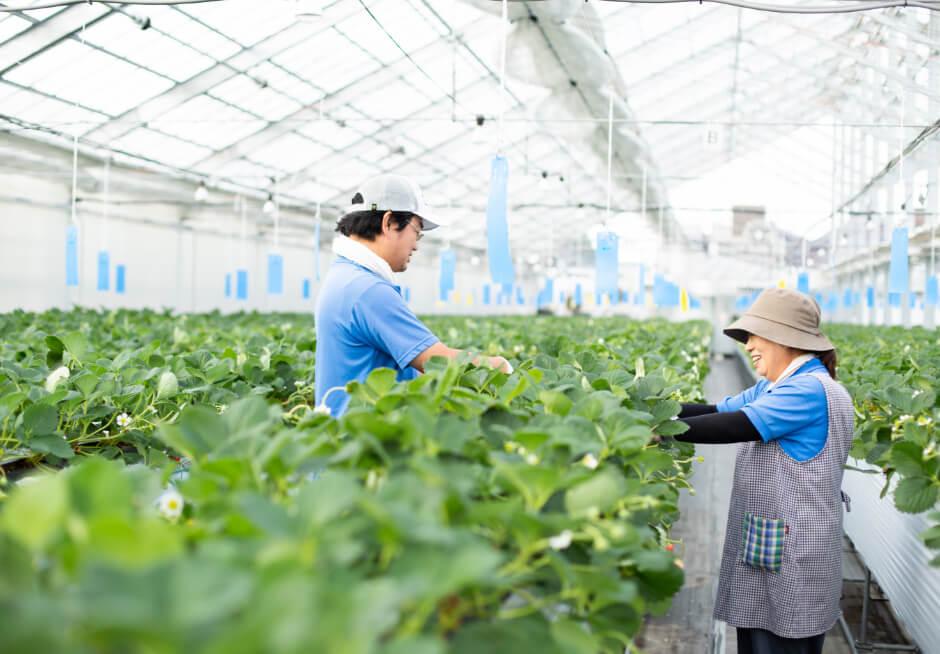農作物のハウス栽培の様子